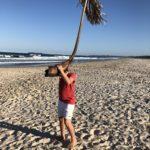 Palm frond head on Brunswick Heads Beach