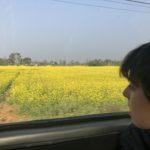 Mustard fields outside of Chitwan National Park
