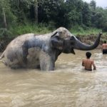 Mae Rim elephant sanctuary