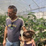 Exploring a fig farm outside of Chiang Mai