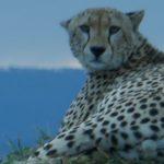 Serengetti National Park