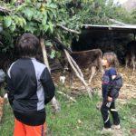 Visiting Ana Maria's farm, Ollantaytambo (while she picks granadillas)