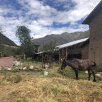 La Hacienda Murillo, Ttio